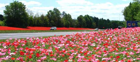 Highway Scene with wild flowers